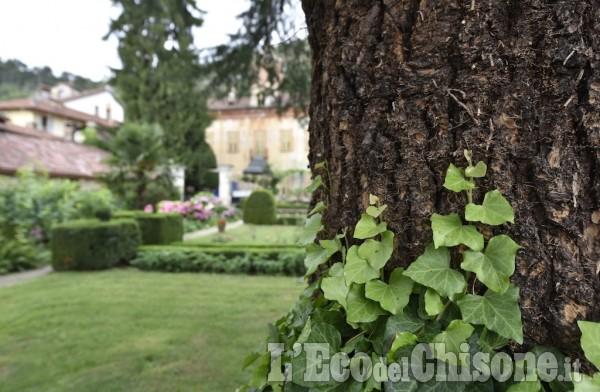 Alberi monumentali e giardini da scoprire