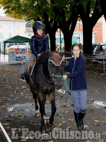 Vigone, mais  e cavalli