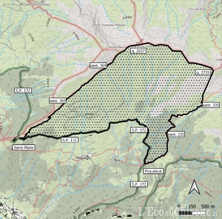 Fenestrelle: divieto di accesso al rimboschimento di Pequerel per non disturbare la riproduzione del lupo