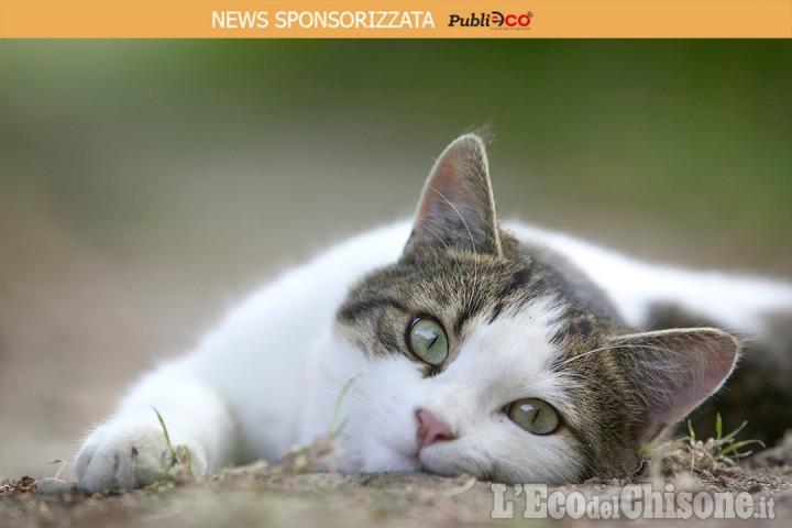 I gatti soffrono di solitudine?