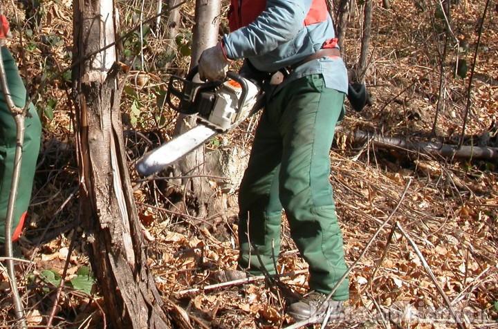 Andare nei boschi per far legna da ardere in Piemonte è vietato: chiarimento dei Carabinieri forestali