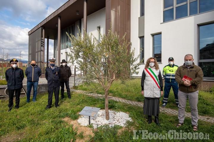 Orbassano: un ulivo davanti alla biblioteca in memoria delle vittime del Covid