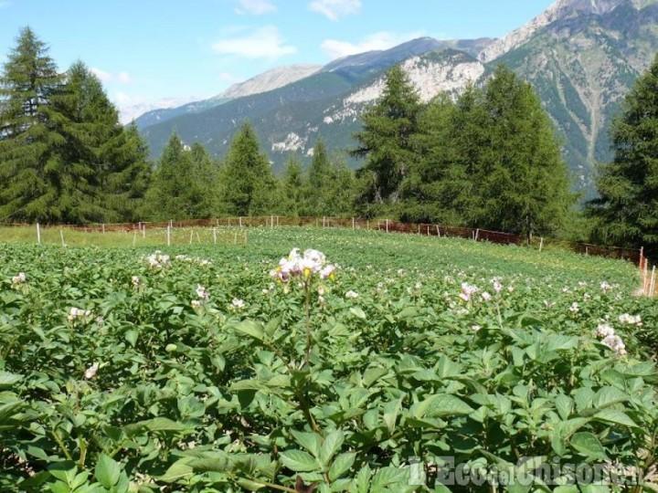 Gusta Pragelato presente i prodotti e i produttori del Parco Alpi Cozie