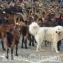 Foto Gallery: Coazze : Festa rurale del Cevrin