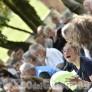 Foto Gallery: Luserna San Giovanni: festa dell'Uliveto