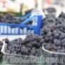 Foto Gallery: Prarostino: La festa dell'Uva