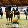 Foto Gallery: Pinerolo ,Equitazioìne ad Abbadia GP