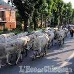 Foto Gallery: Revello: la transumanza ha risalito la Valle Po