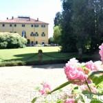 Foto Gallery: Le ortensie di Villa Doria