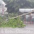 Maxi acquazzone e grandine nella cintura sud, un albero caduto sulla pensilina di viale Kennedy