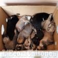 Revello: cuccioli abbandonati nella chiesa parrocchiale Collegiata