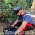 Nichelino: lanciano la refurtiva durante una fuga rocambolesca, arrestate tre giovani rom