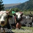 Usseaux: 57ª Fiera e Rassegna Zootecnica di Balboutet il 23 agosto