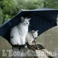 Tornano un po' di piogge ad inizio settimana!