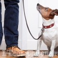 Pinerolo: Volontari del Comune portano a passeggio il cane di  anziani e persone in quarantema
