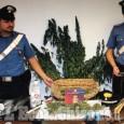 Moretta: coltivava cannabis in casa, arrestato 54enne