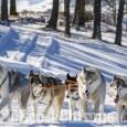 Turismo a Sestriere: le attività complementari allo sci diventano l'offerta principale