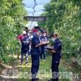 Saluzzo: i controlli dei Carabinieri per contrastare il lavoro irregolare nei frutteti