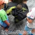 Cantalupa: riccio intrappolato, liberato dai Vigili del fuoco