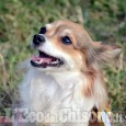 Pinerolo, cani e gatti  nel week end al Naturalistico