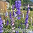 """Febbre da fiori nelle valli: anche """"Flor"""" si sposta in montagna per l'edizione estiva"""