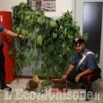 Coltivavano cannabis in casa, tre giovani denunciati nel saluzzese