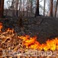 Emergenza incendi: le norme di comportamento suggerite dall'ASL TO 3