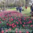 """Pralormo: al Castello """"Messer Tulipano"""" con centomila fiori"""