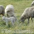 Segregata e violentata in alpeggio: nei guai due pastori