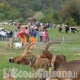 A Perosa Argentina la rassegna zootecnica e Fiera d'autunno