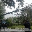 Volvera: albero caduto, interrotta strada antica di Cumiana