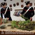 Piossasco: 17 chili di marijuana trovati nel campo nomadi, tre gli arrestati