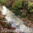 Piossasco: morìa di pesci nel torrente Sangonetto