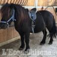 Vigone, Zucchea: cavalli e concerti