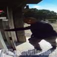 Beinasco: il bottino della rapina va in dote alla figlia, arrestato il padre della sposa