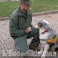 Polpette avvelenate contro i lupi a Roure, pericolo anche per il territorio di Perrero