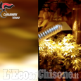 "Valgioie: produceva marijuana ""a Km zero"", arrestato giardiniere"
