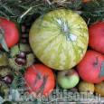 San Germano Chisone: Festa della zucca in borgata Turina