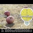 Embedded thumbnail for Scervelliamoci... Offline