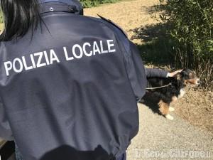 Nichelino: cane scappato, salvato dalla Polizia locale nei pressi della Ferrovia