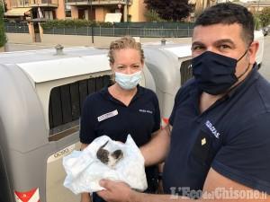 Volvera: gattino gettato nella spazzatura, salvato dagli agenti di Polizia locale