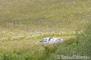Lupi: «La più grossa predazione in Val Chisone».  Ma il gregge non era custodito