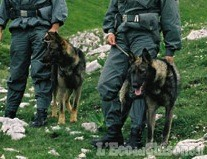 Cani avvelenati a Usseaux: la Forestale ha trovato le sostanze velenose