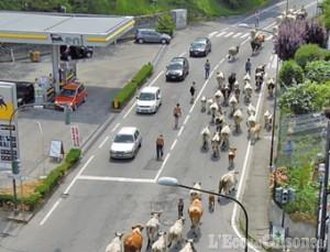 Mucche in città: la foto vincitrice della settimana