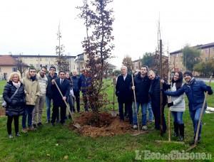 """A Rivalta piantati in via Togliatti i primi alberi di """"Italia Viva"""""""