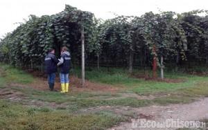 Sei lavoratori in nero nei frutteti del saluzzese: i controlli dei carabinieri