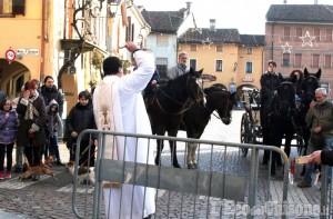 Moretta: per S. Antonio oggi benedizione e incanto degli animali