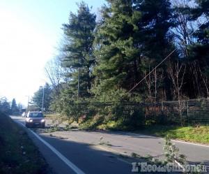 Bricherasio: alberi in strada abbattuti dal vento