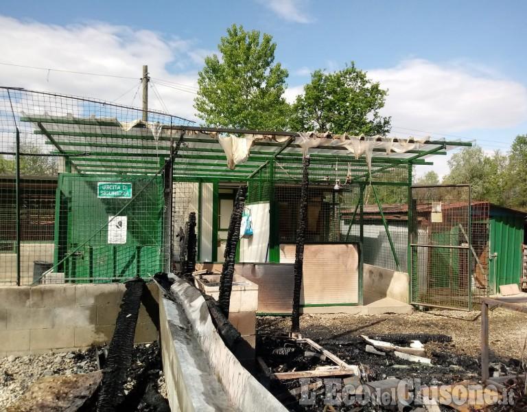 Canile di Cavour in fiamme: tanti danni e paura, ma gli animali sono salvi