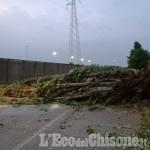 Volvera: disagi e alberi caduti a causa del violento acquazzone